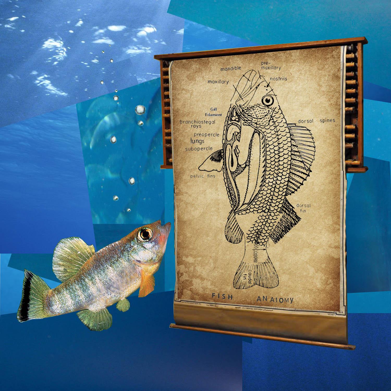 fish_lungs2 copy.jpg