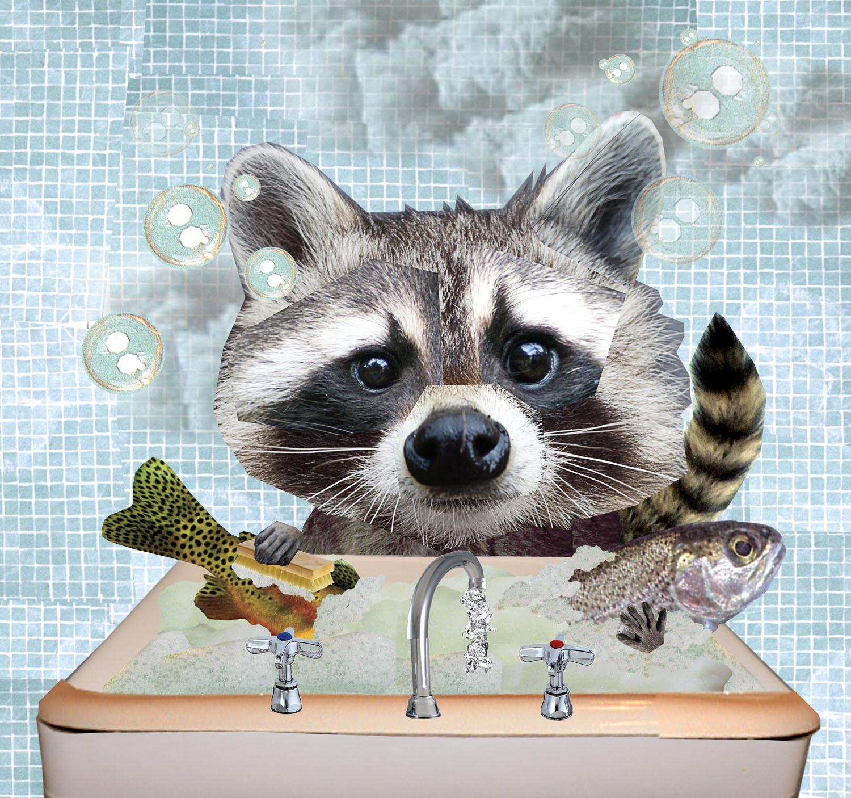 raccoon2 copy.jpg