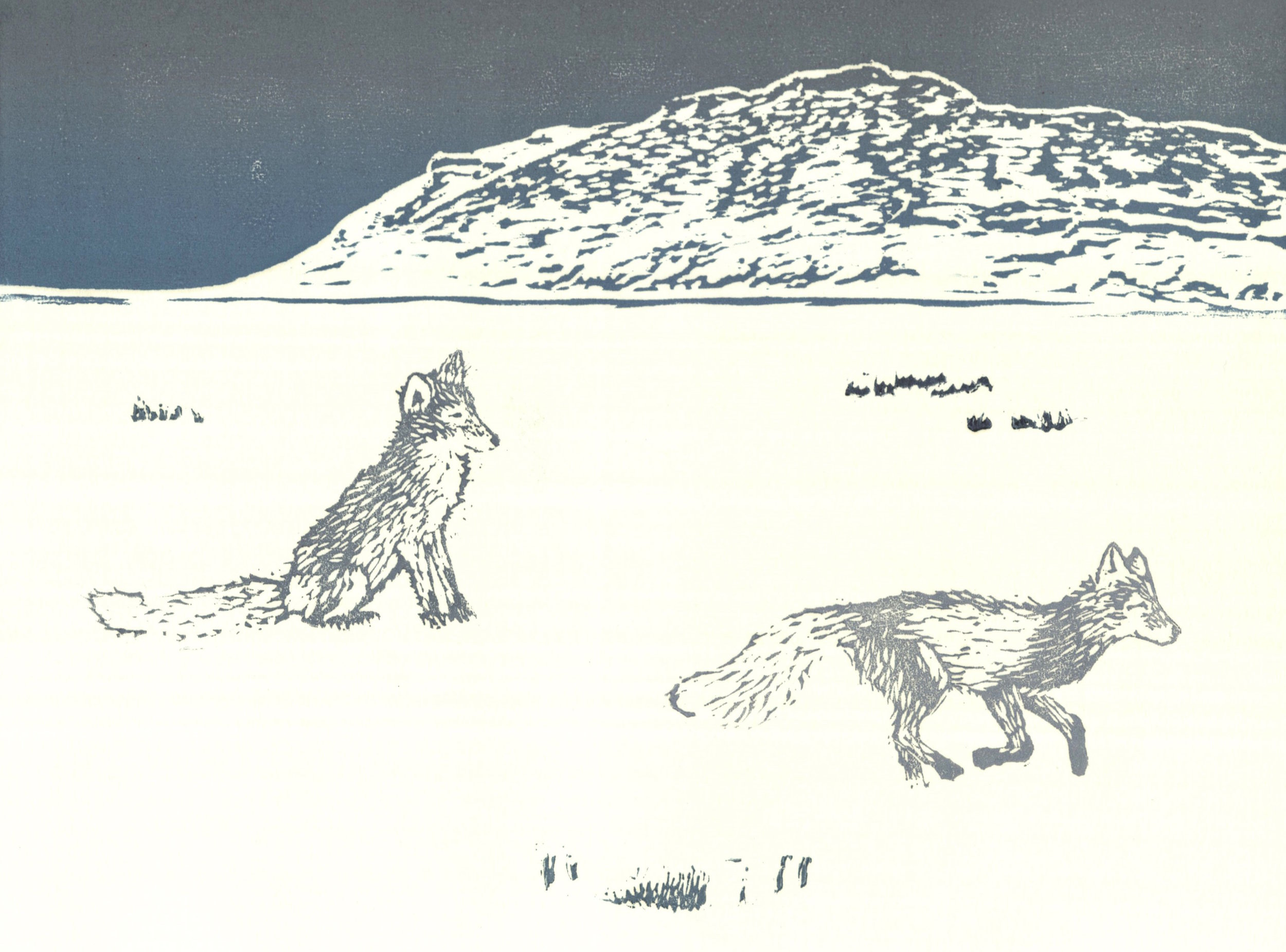 Arctic Fox and Slope Mountain  woodcut and linocut 10 x 8 inches 2016