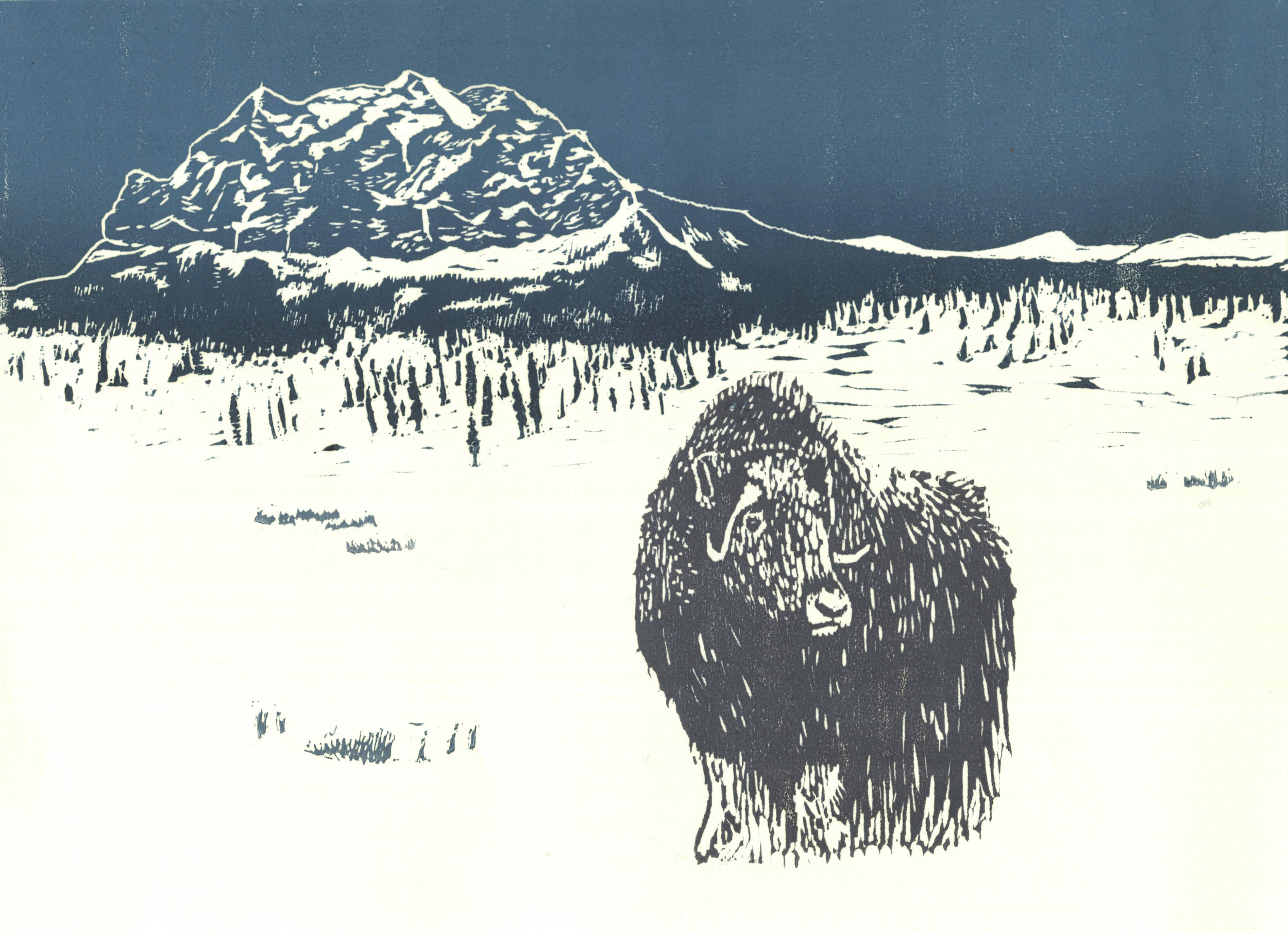Muskox and Sukakpak Mountain  woodcut and linocut 12 x 9 inches 2016