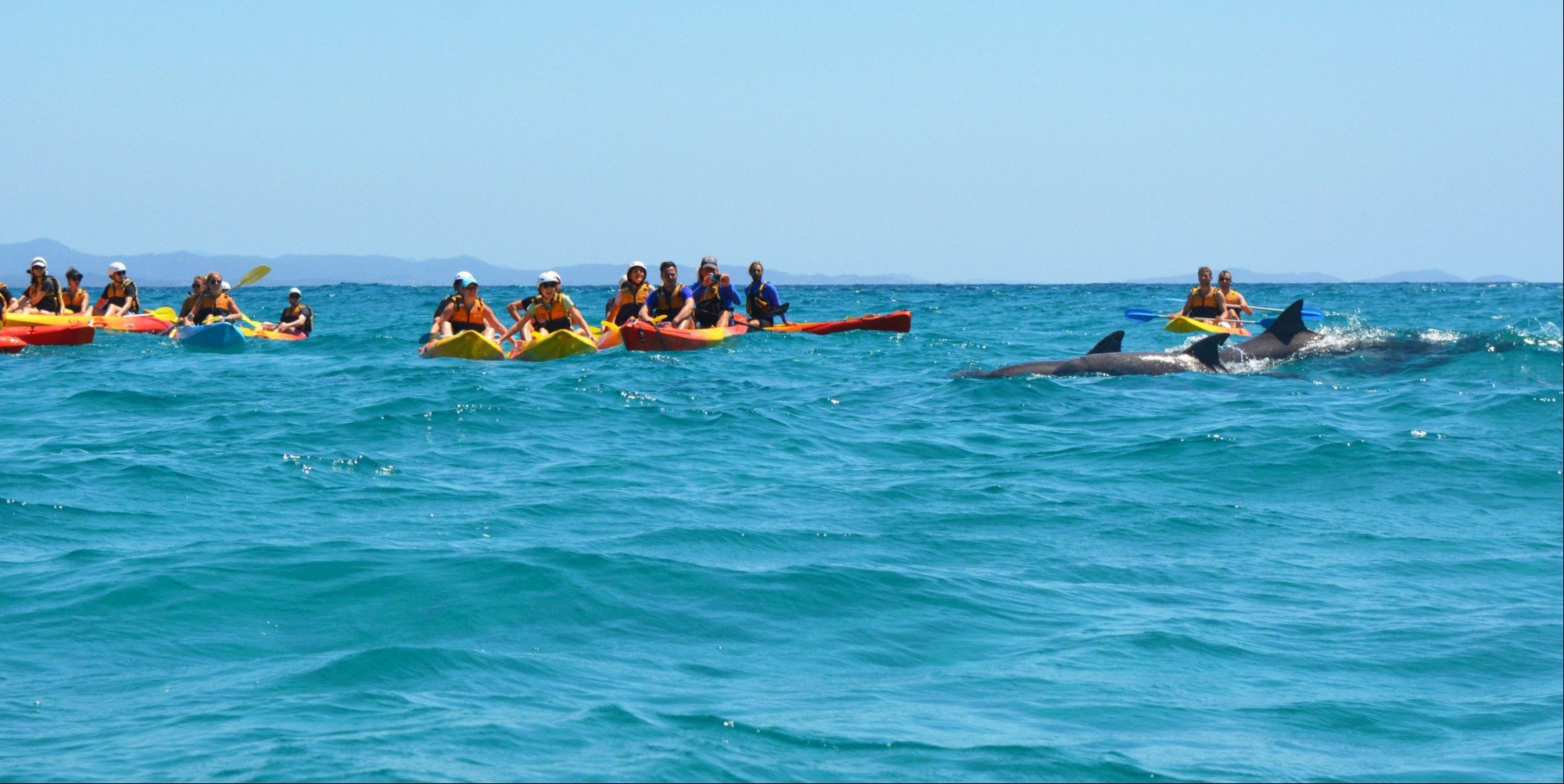 Byron Bay   Dolphin Kayak (photo credit  Pedro O'connor )