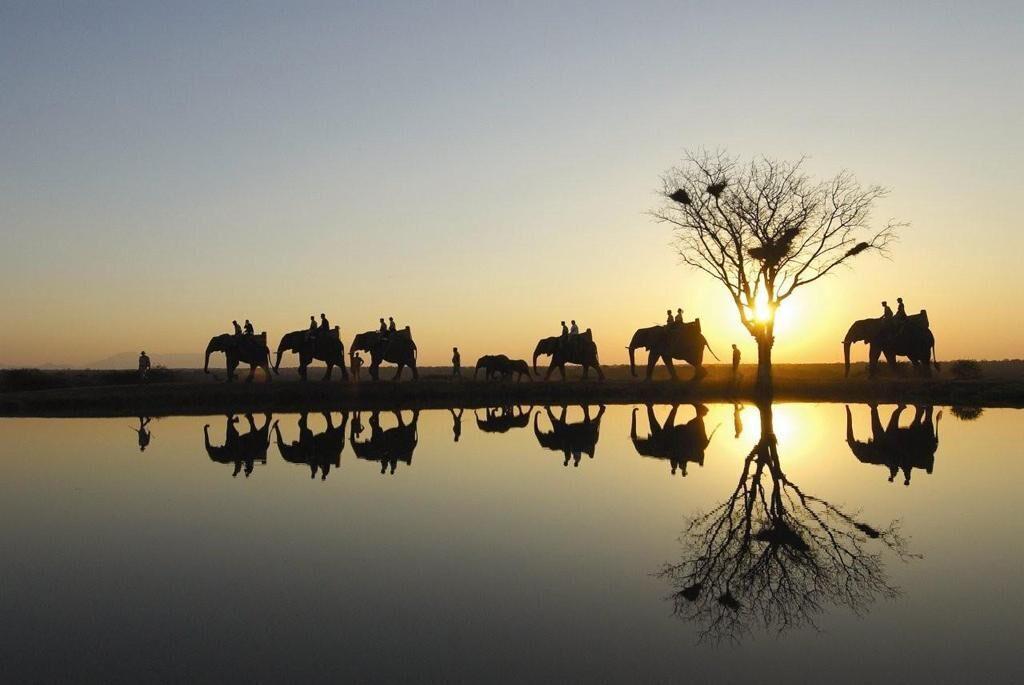 Safari sunset on elephant at Camp Jabulani