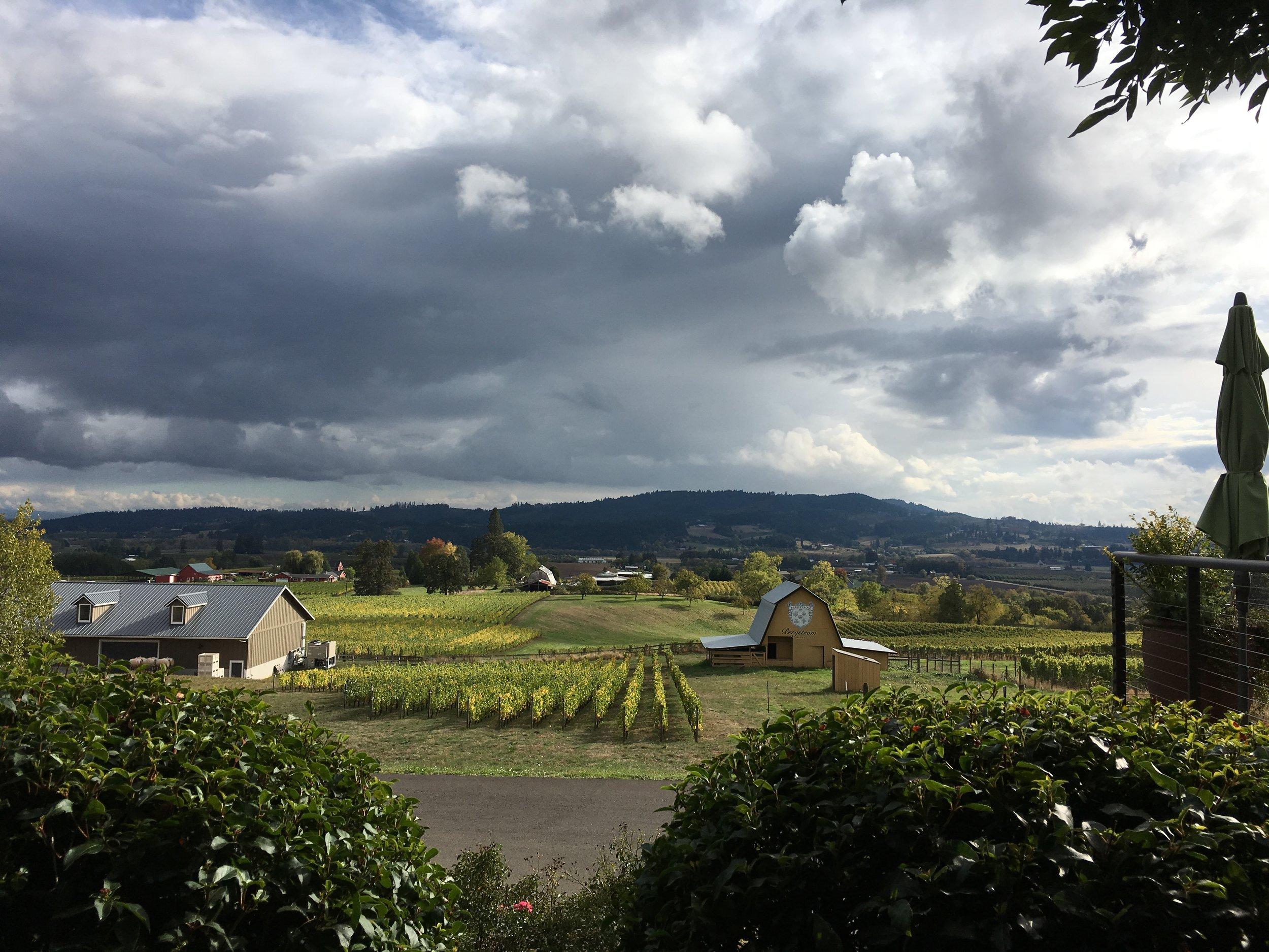 Bergström Wines ;  photo credit Abigail Meckem
