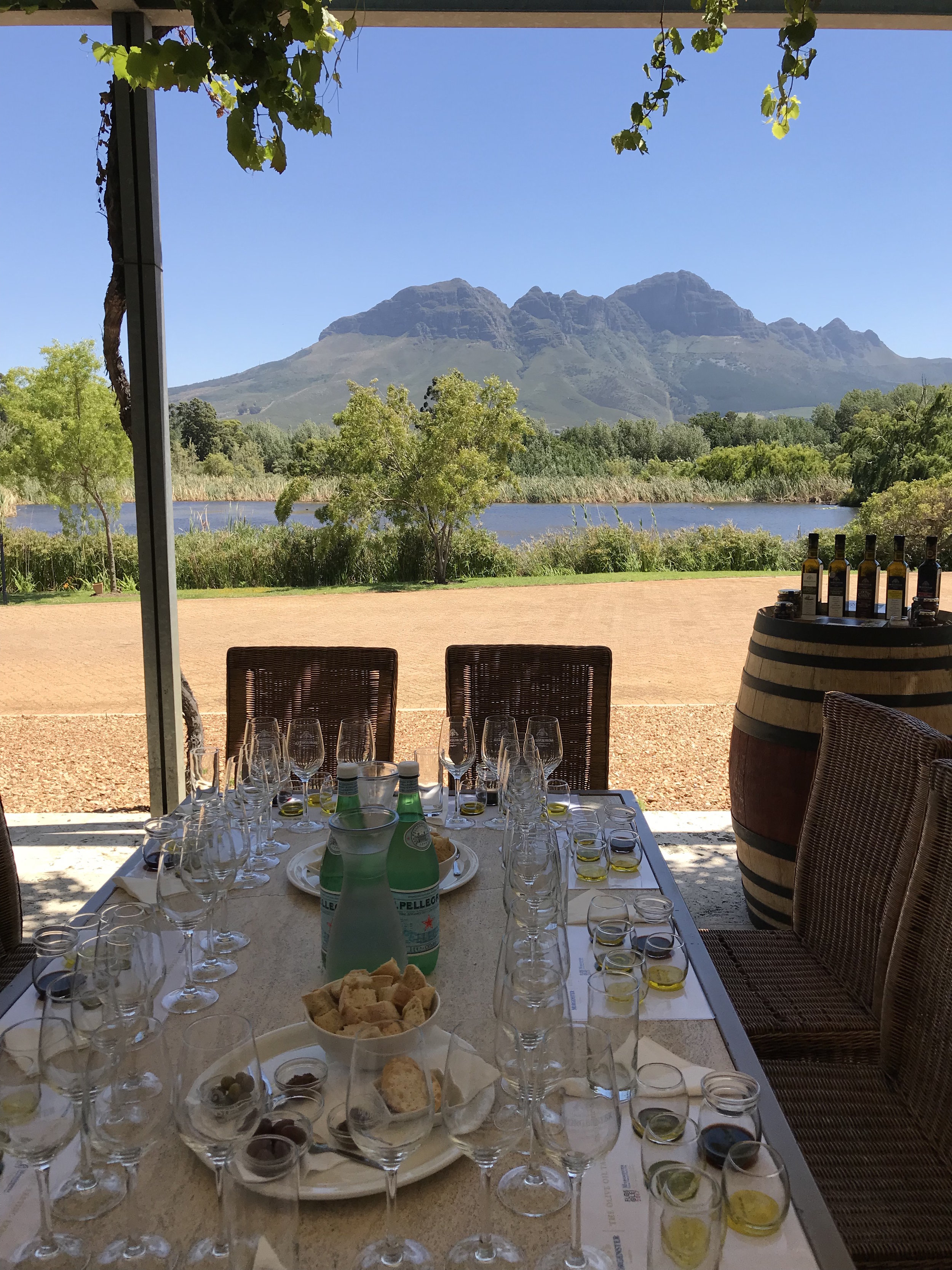 Olive Oil Tasting in South Africa Wine Country at  Morgenster Stellenbosch