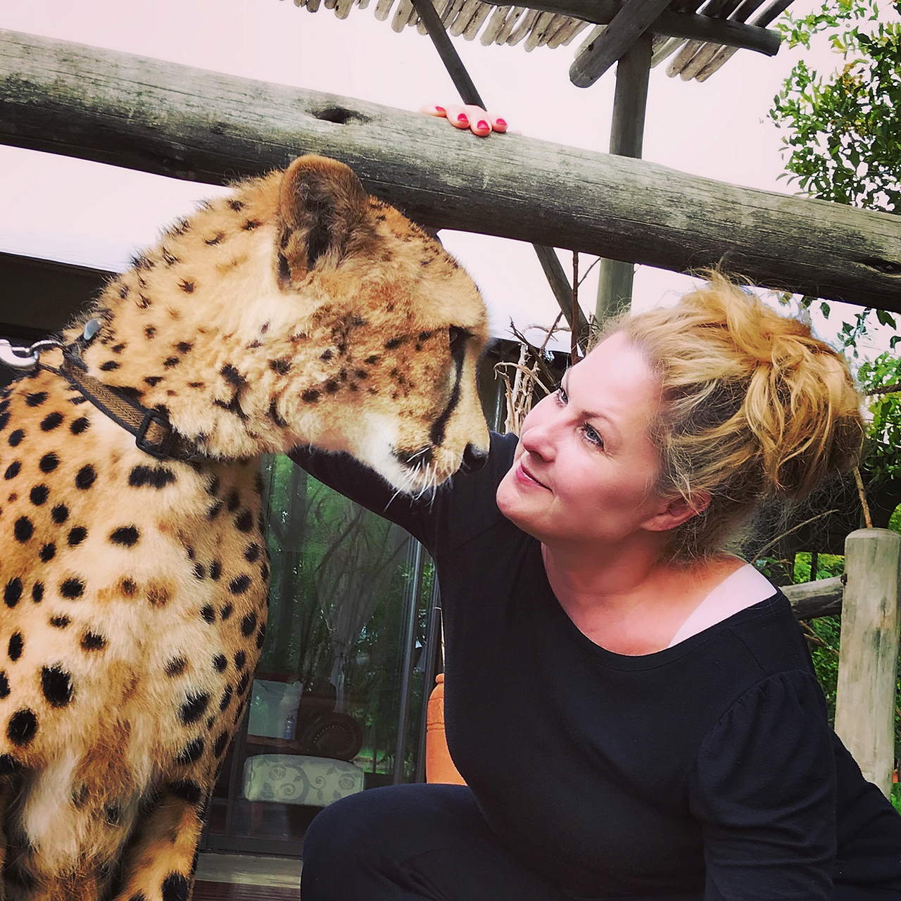 The Cheetah; an Unexpected Moment