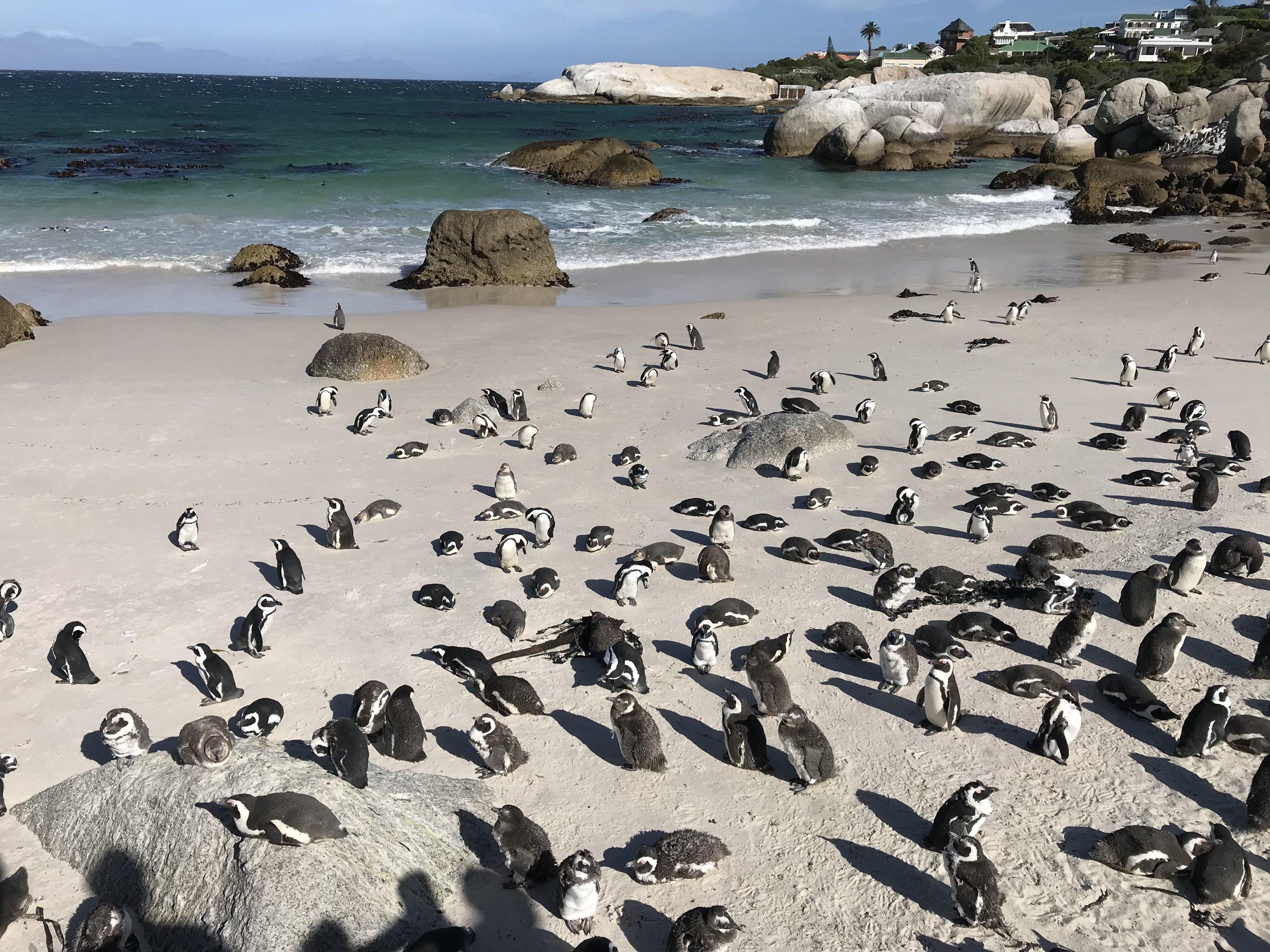 Visit penguins