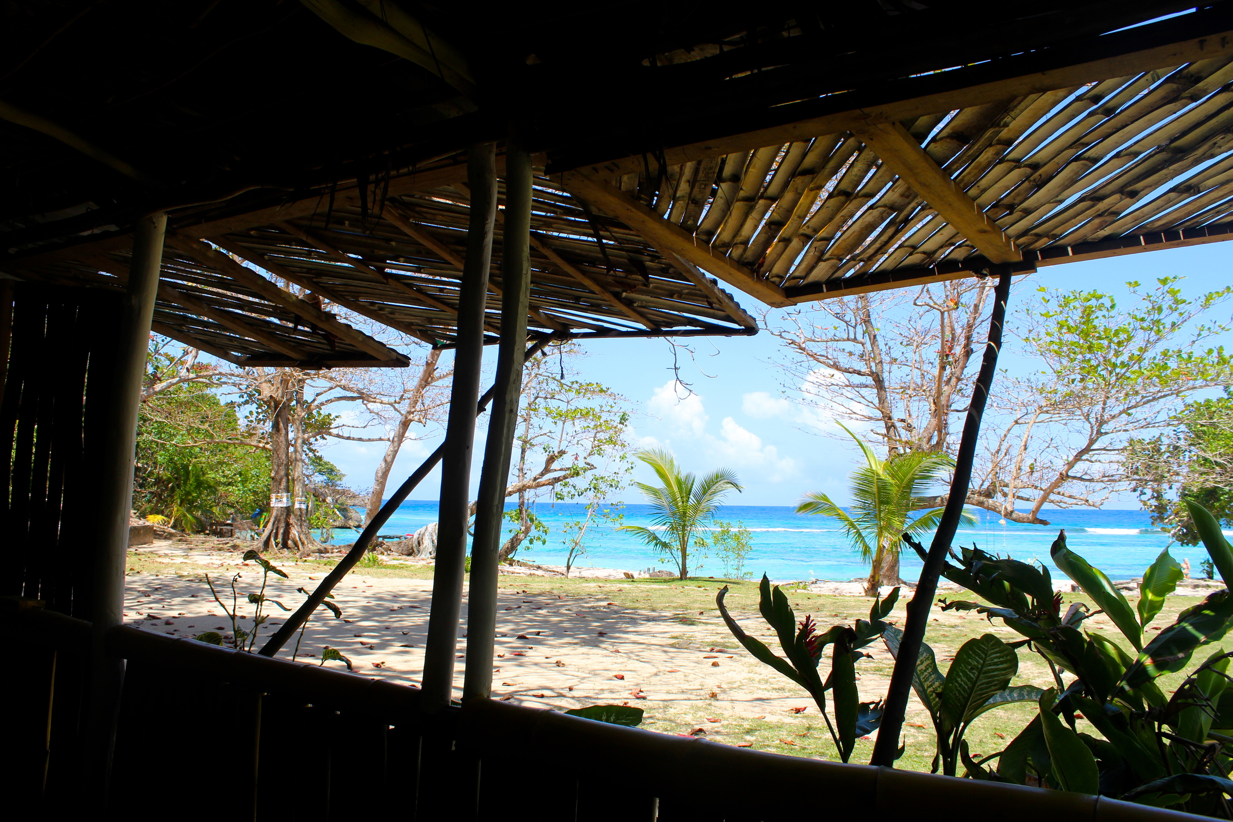 winnifred beach bar