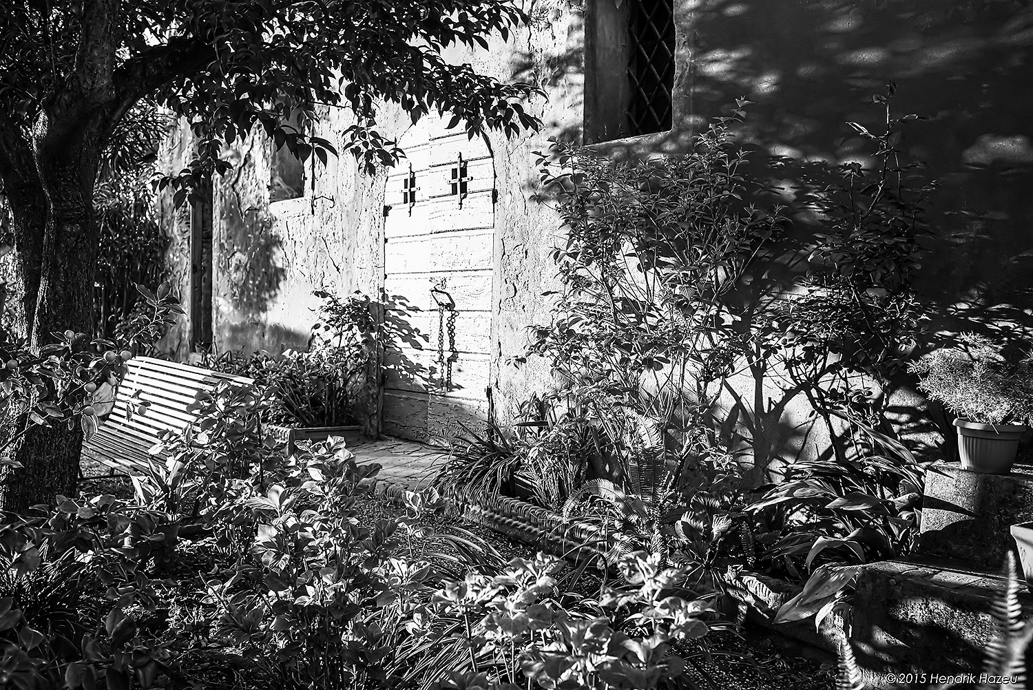 Overgrown Backyard in Buggiano Castello, Tuscany