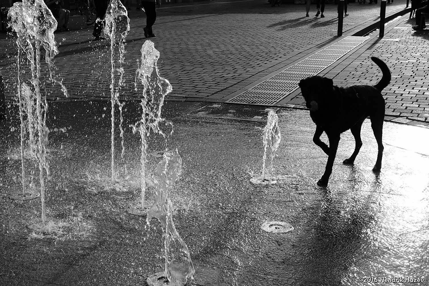 Dogging the Fountain - Fuji X-Pro2, WR 35mm/f2, JPEG SOOC: Jacked highlights & shadows !