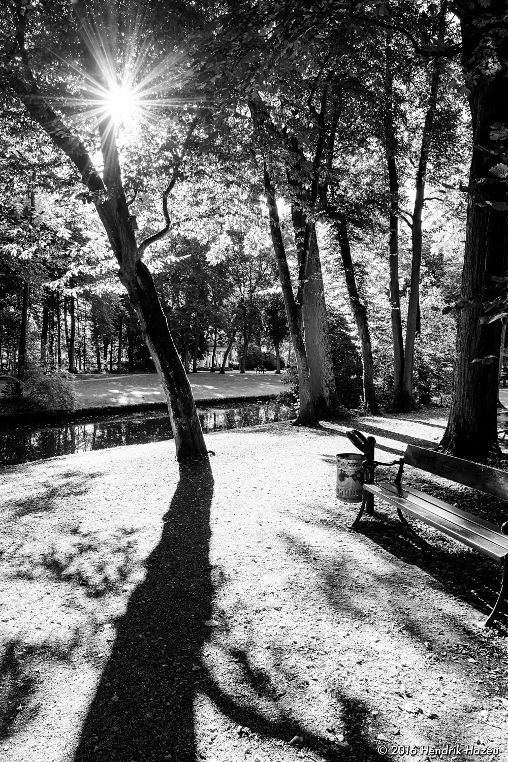 Contre Jour in the Park - Visualized with XF 16 mm f1.4 WR on X-Pro2