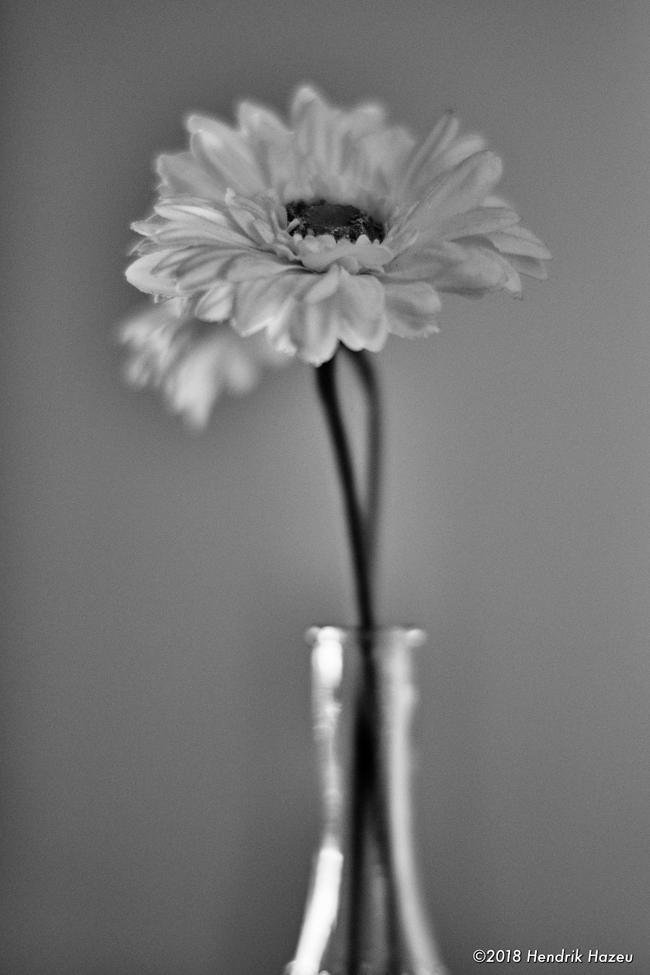 Flower in glass, 58mm f/1.4 @f/1.4