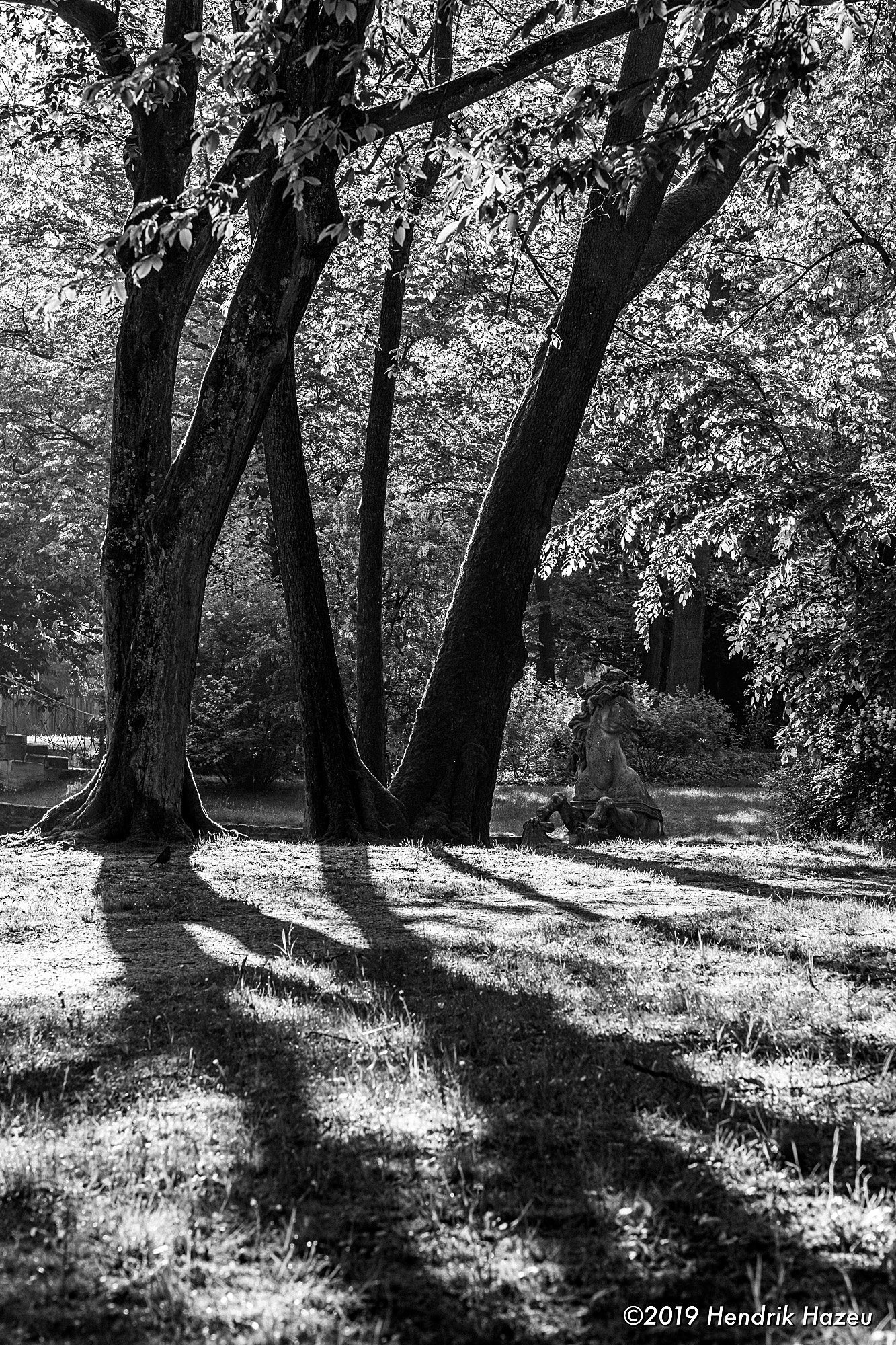 Contre-jour image of trees in Bayreuth's Hof Garden, captured on XF 56mm F/1.2 R @F/5.6, 1/140 sec, 400 ISO