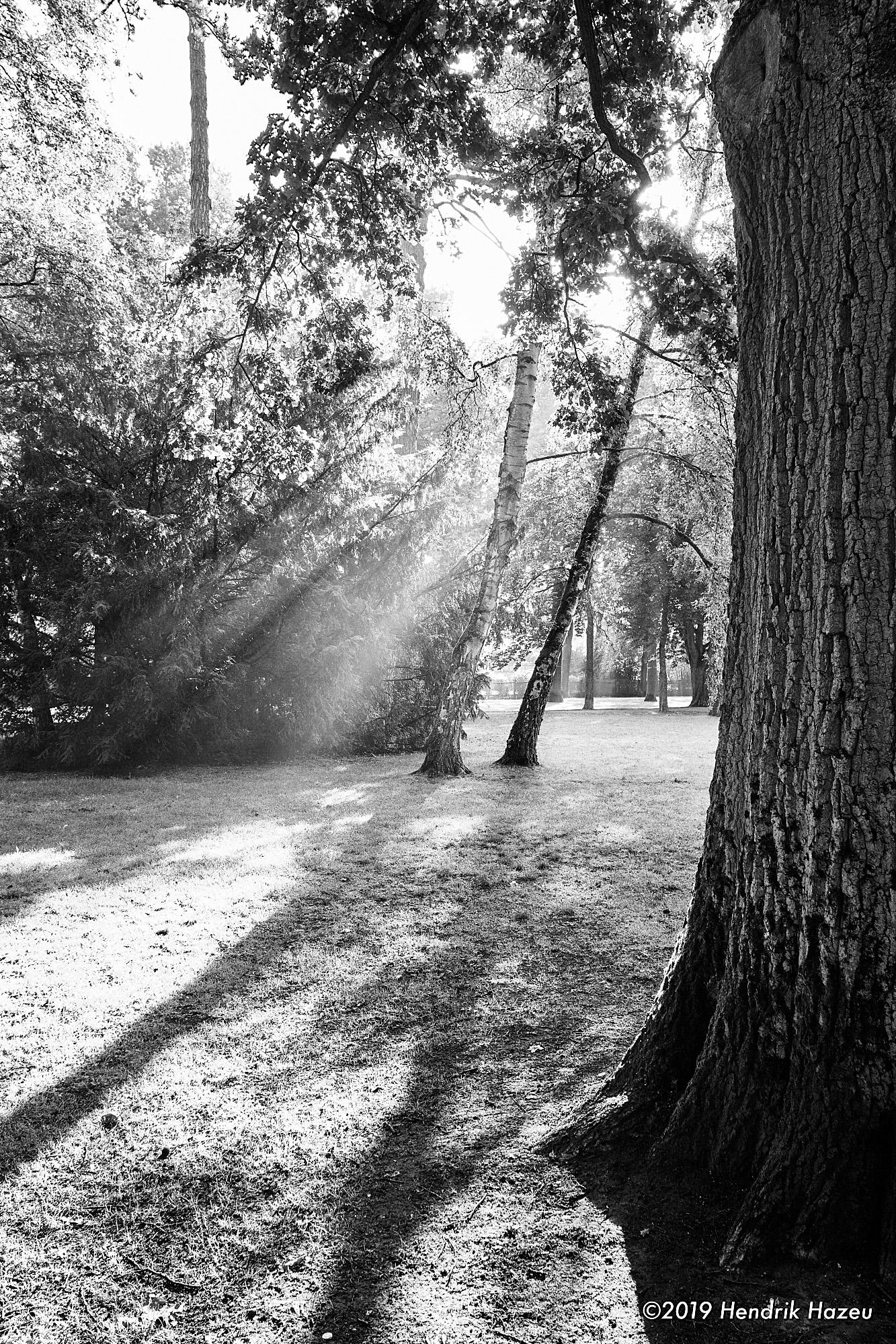 Sun's rays thru the fog follow the shadows, X-Pro2 with XF18 mm F/2 @F/8, 1/14 sec, ISO 200, +1 EV
