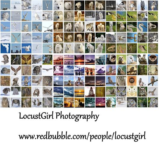 heather king 2.jpg