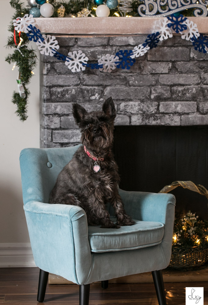 Belle Christmas Photo Shoot 2015 LO RES-9125.jpg