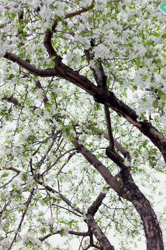 ottawa landscape photographer mailyne briggs 2.jpg