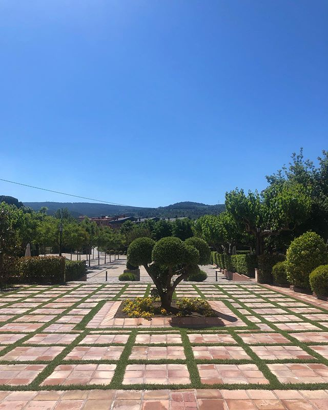 Un dia radiant per començar la setmana a @cavesllagrimador.🌳🌱☀️ An awesome dat to start our week at our cellar. . . #llagrimador #catalunyaexperience #tradition #familytradition #wineries #winerytour #winetasting #igersoftheday #igerscatalunya #igerspenedes #igerswine #igerscava #experience #penedes #dopenedes #docava #cava #vino #wine #winelover #cavalover #champagne #ilovewine #ilovecava #cellar #bodegas #work #enoturisme #enoturismo