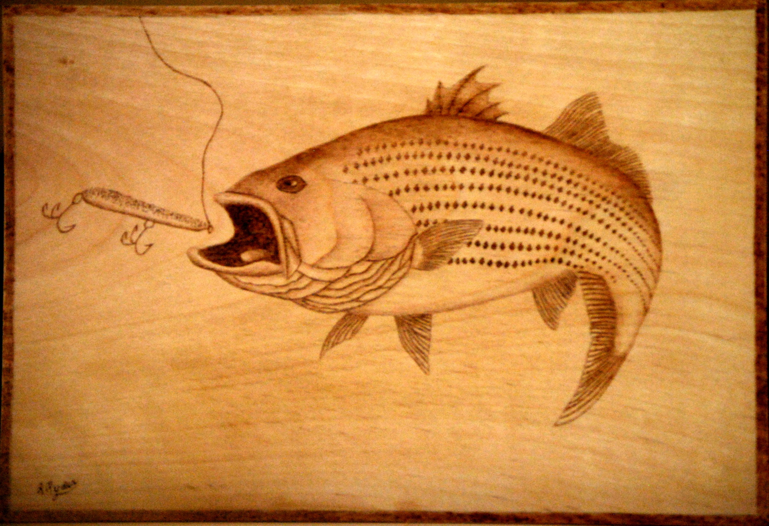 Stripped Bass