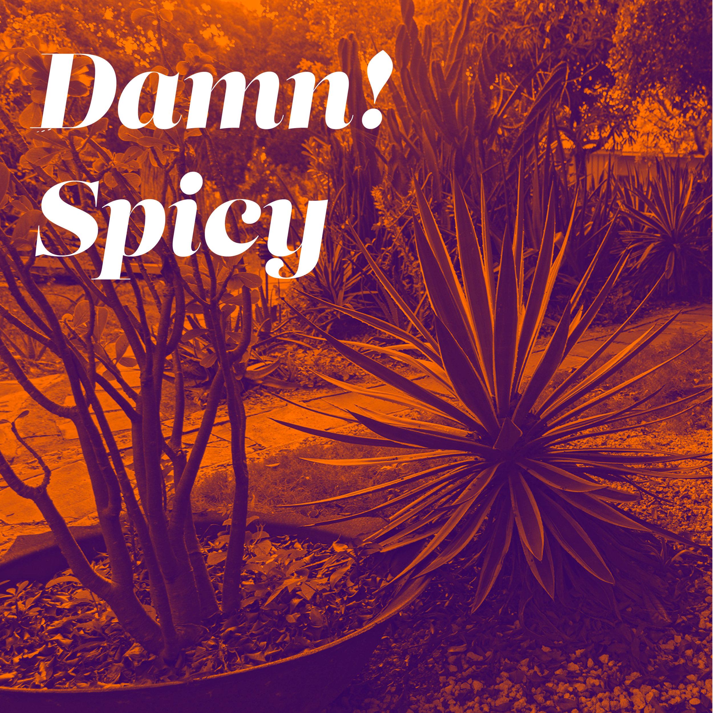 damn spicy logo - insta square.jpg