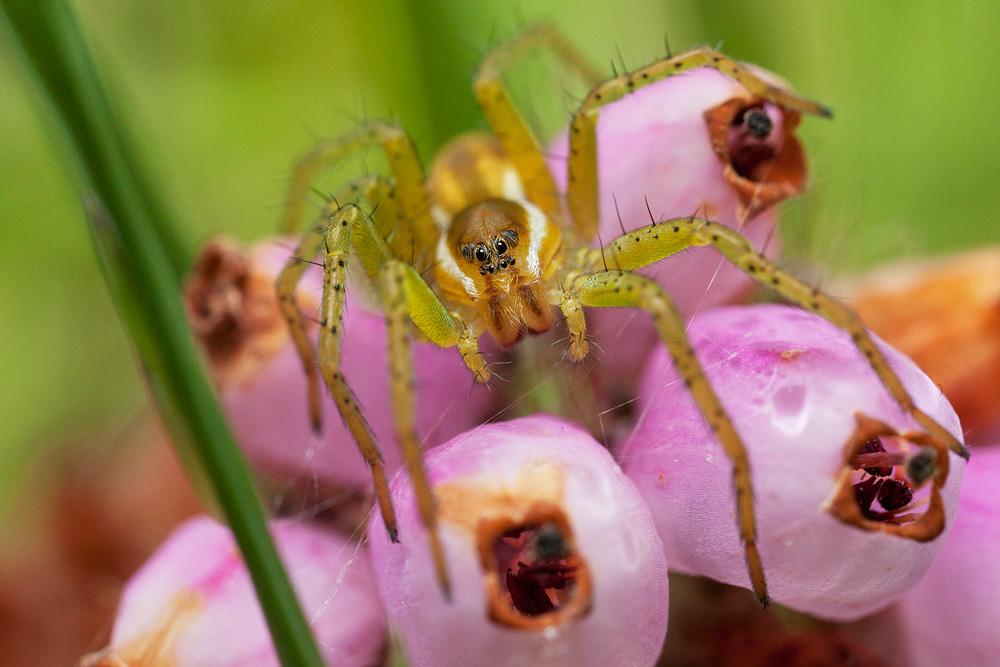raft_spider_1.jpg