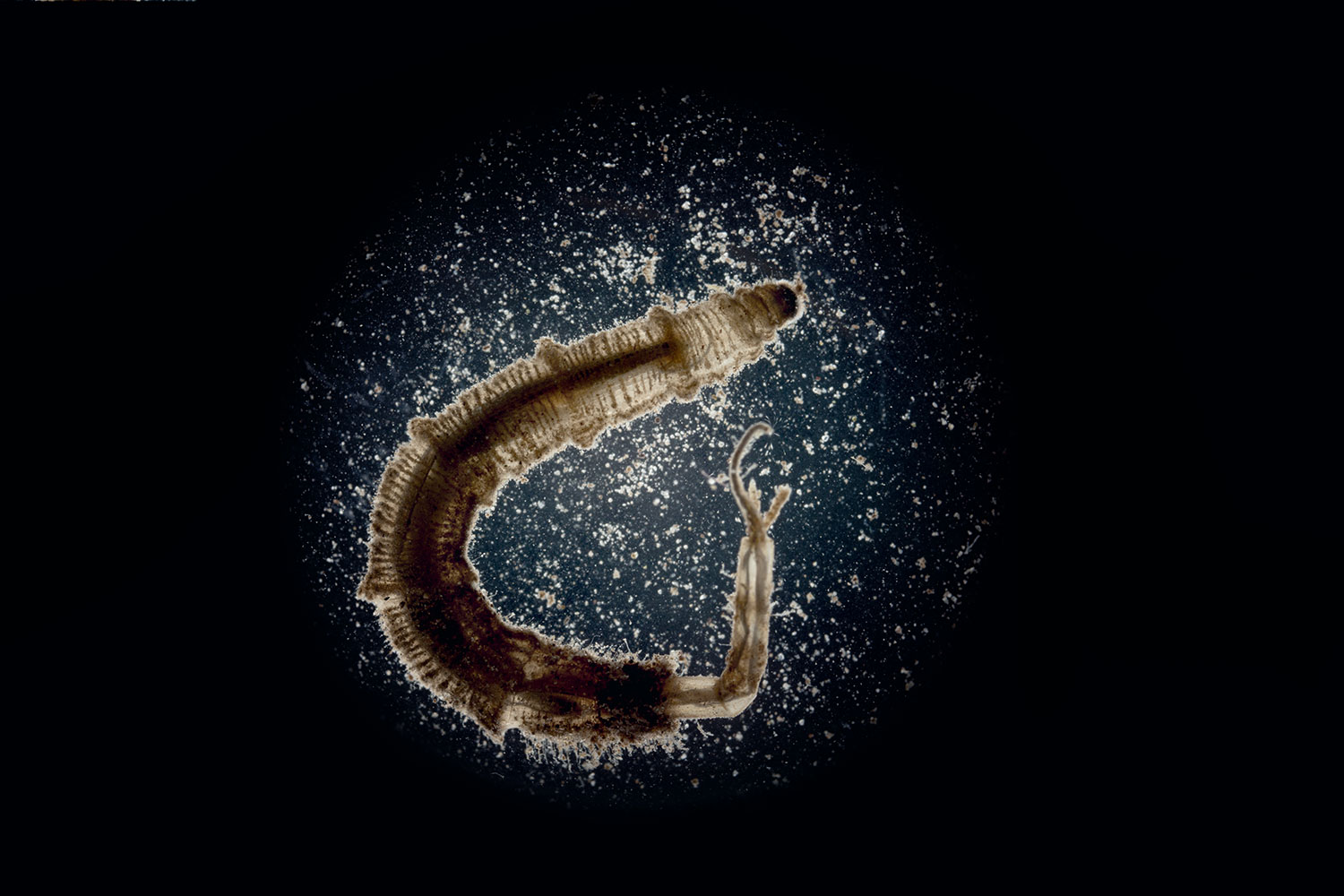 space_worm_two.jpg