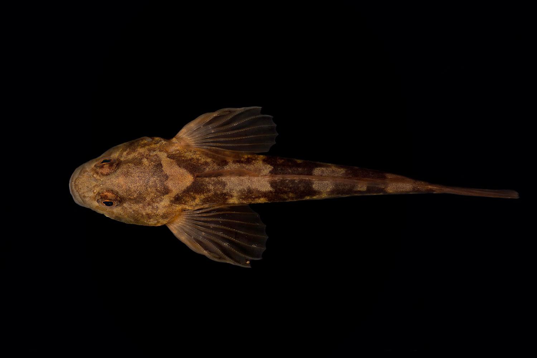 fish_two.jpg