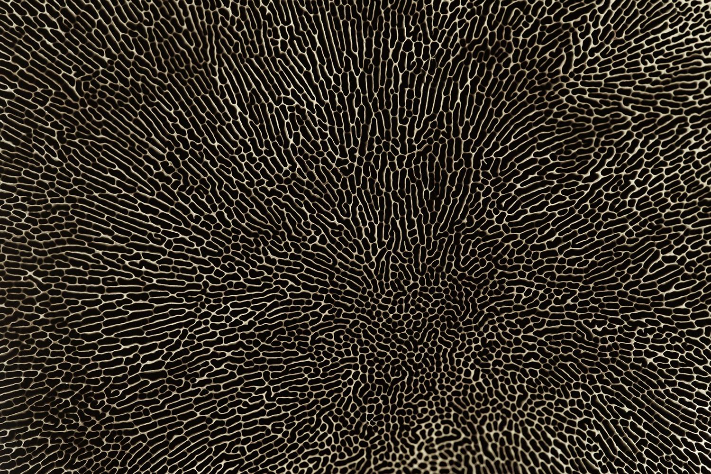 fungi underside