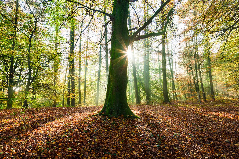 dommet_wood_autumn_web.jpg