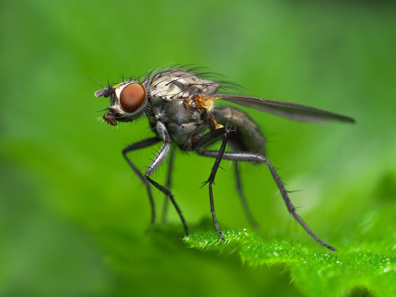 fly_gh5.jpg
