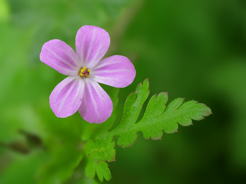 gh5_flower.jpg