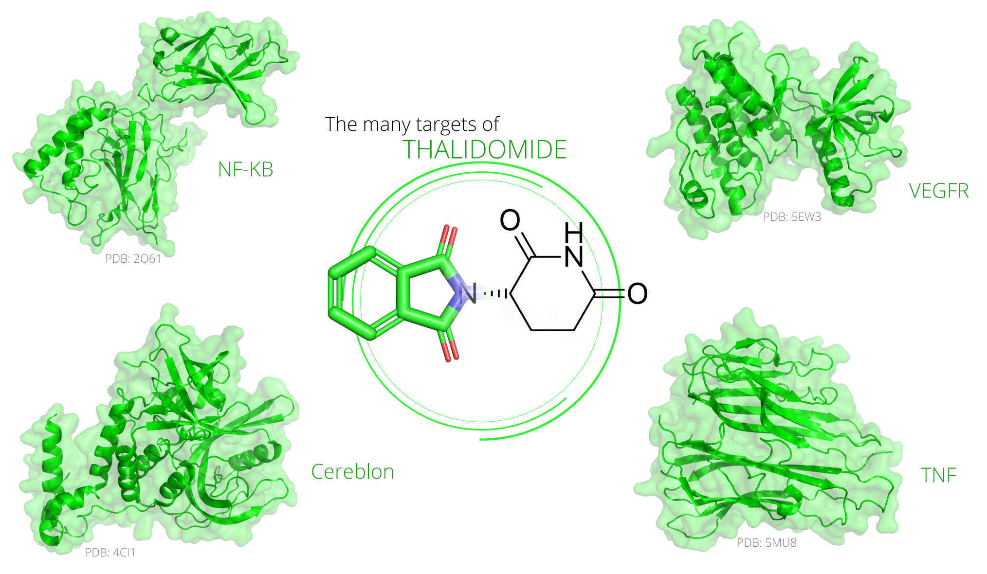 Figure 1.  Thalidomide acts on several proteins through direct binding or on pathway. Relevant drug targets include NF-κB, Cereblon, VEGFR, and TNF-α.
