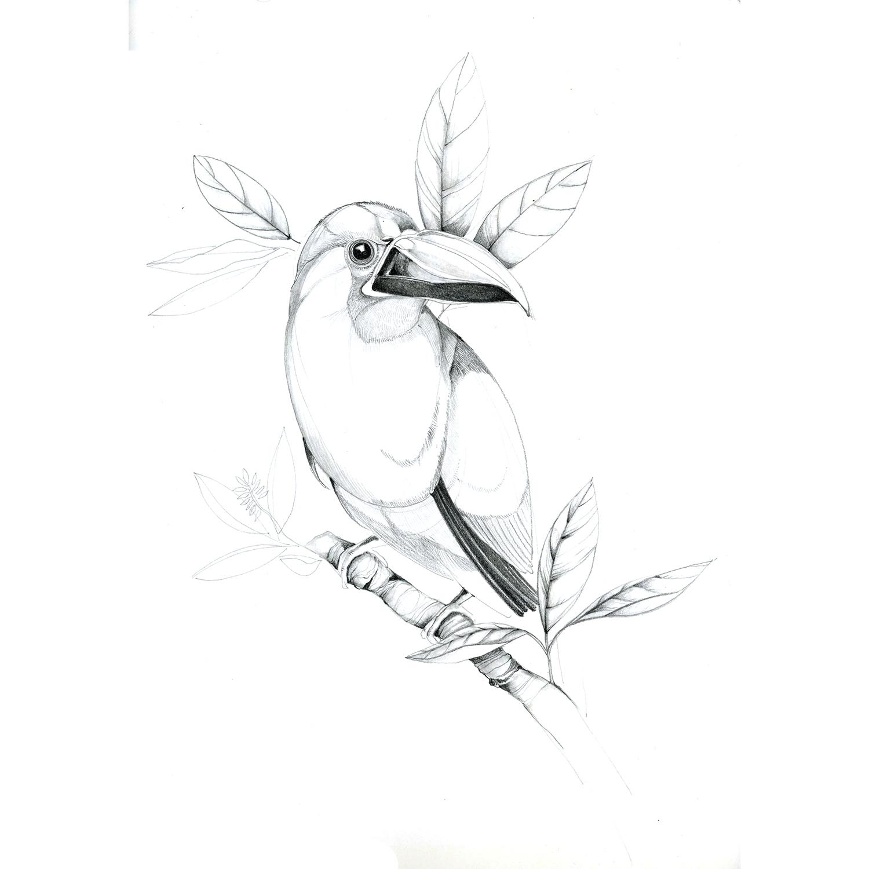 toucan-web.jpg
