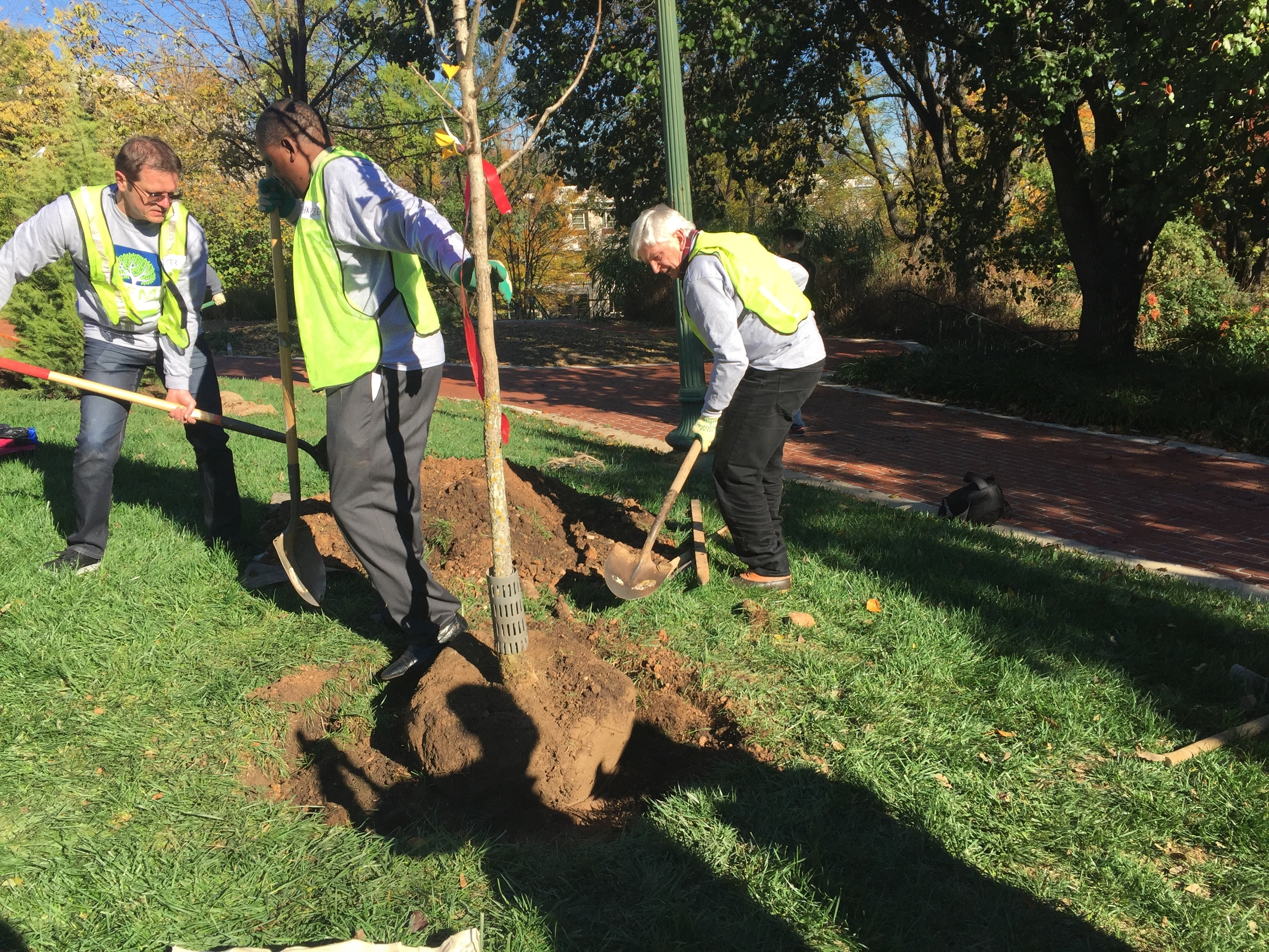 The Ambassadors of Slovakia, Nigeria and Austria (from left) plant a tree. Photo: Julian Steiner