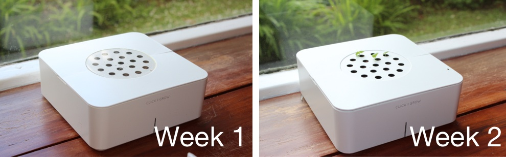 Click & Grow Smart Flowerpot Week 1 & 2.jpg