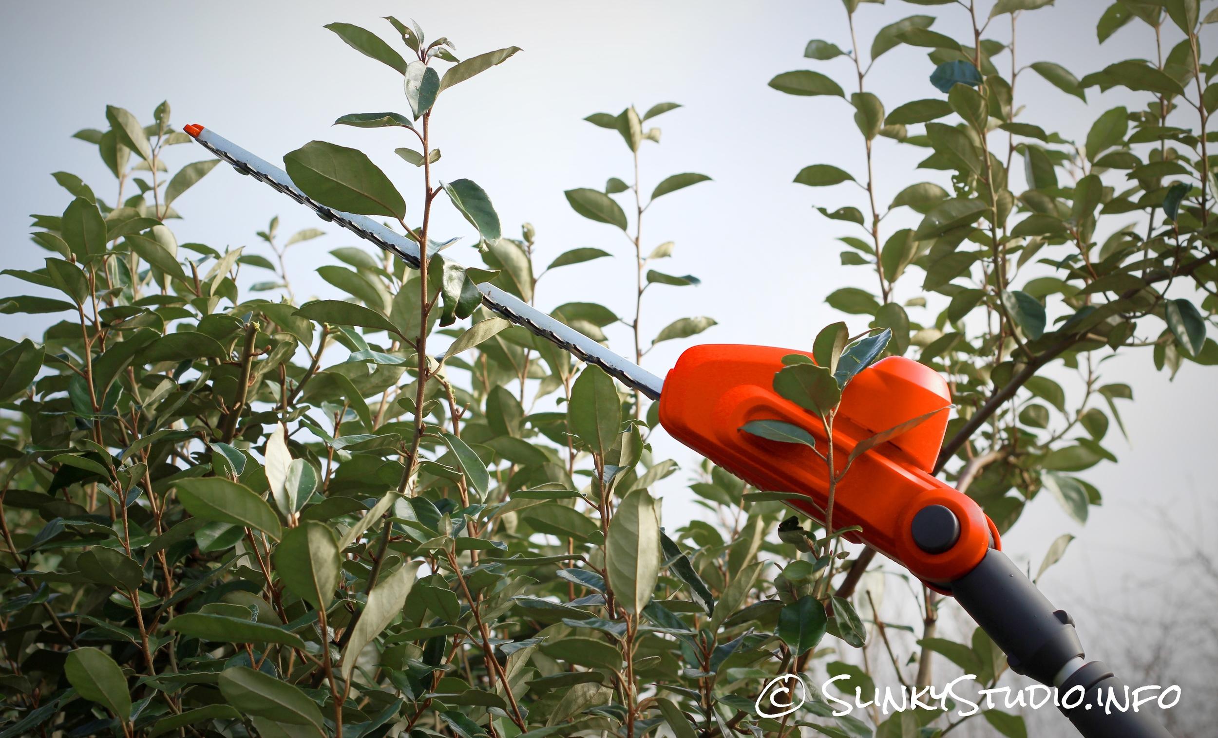 Flymo SabreCut XT Cordless Hedge Trimmer Cutting.jpg