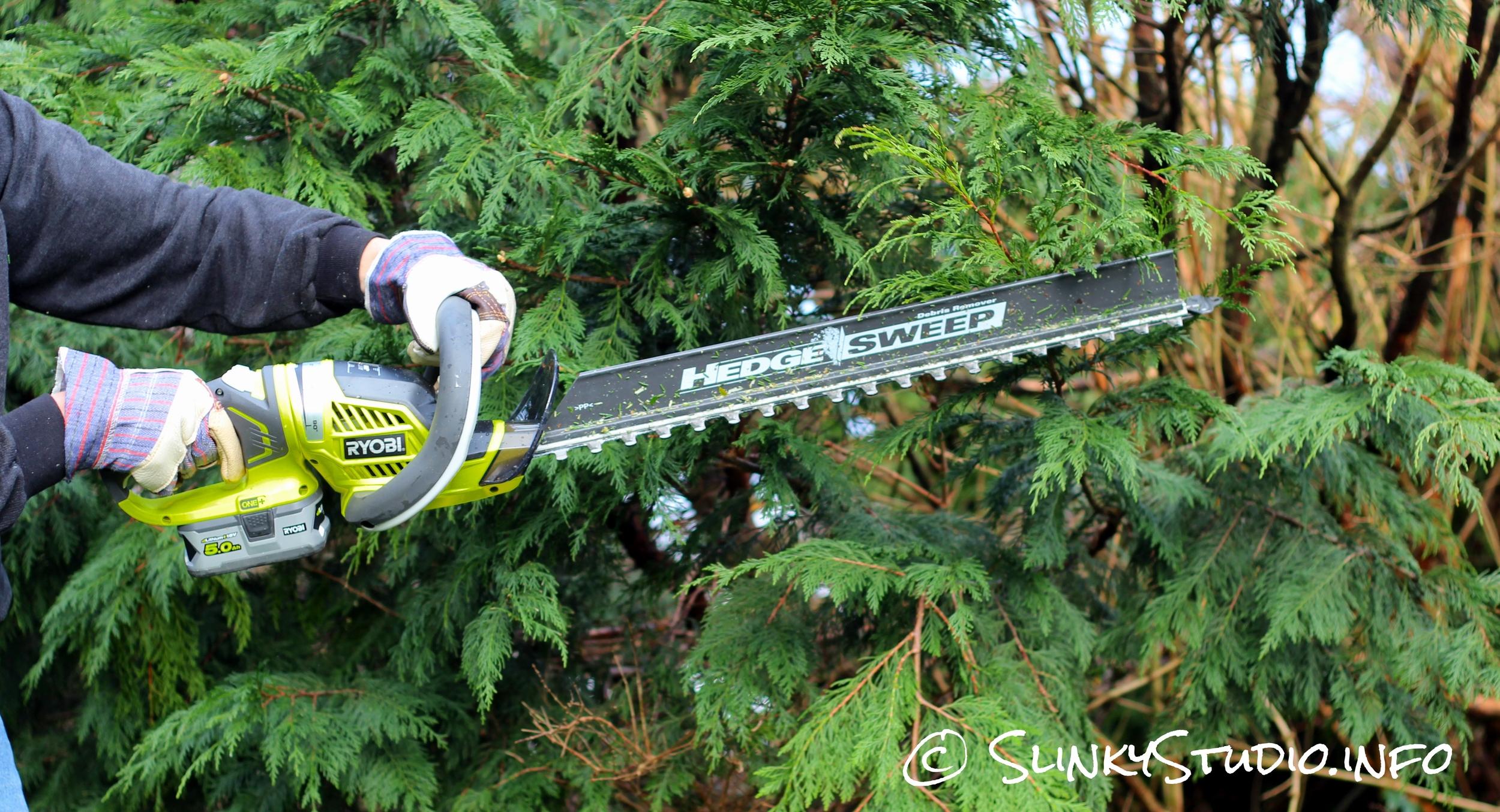 Ryobi One+ Hedge Trimmer Cutting Tree Greenery.jpg