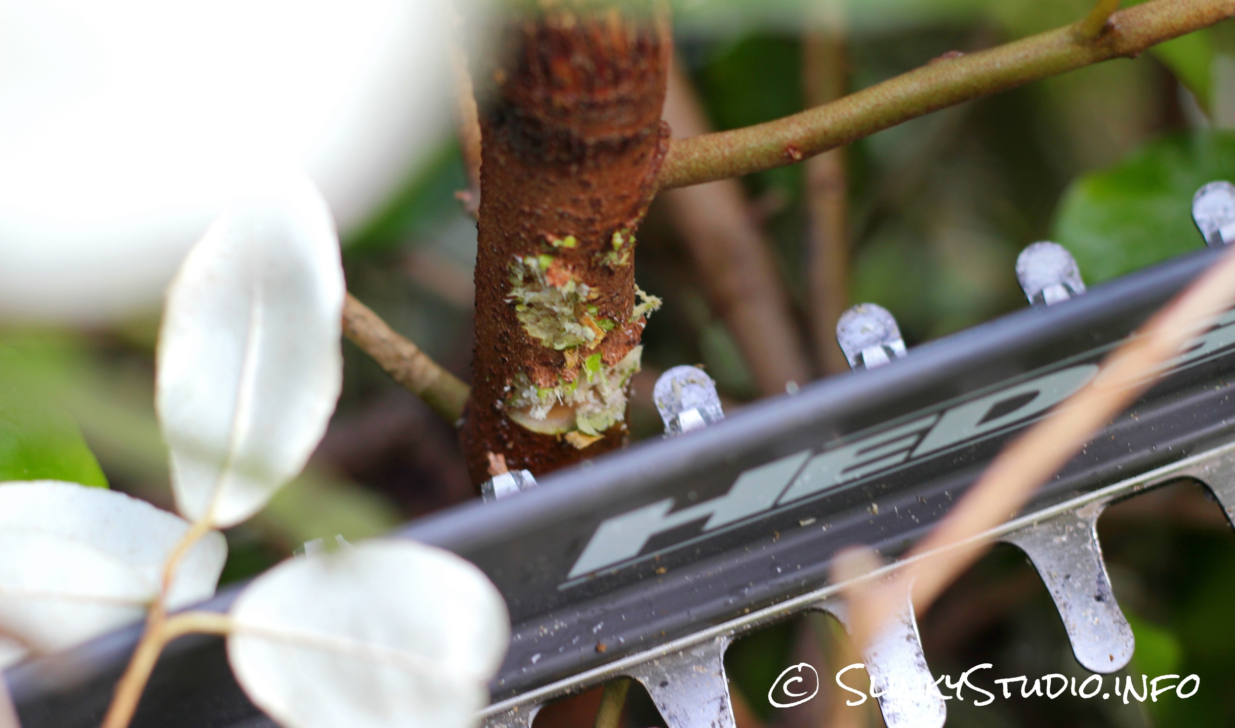 Ryobi One+ Hedge Trimmer Sawing Thick Branch.jpg