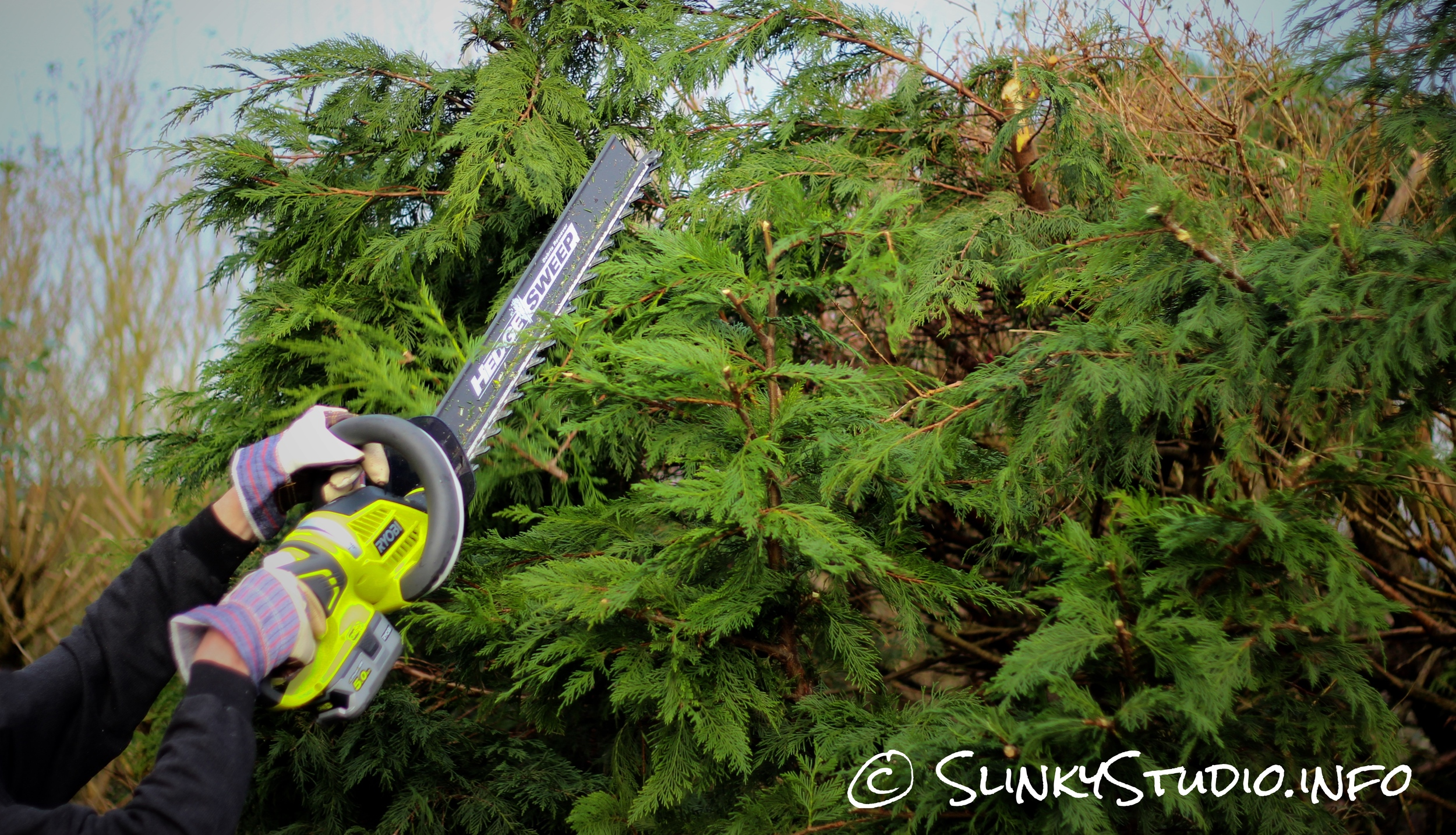 Ryobi One+ Hedge Trimmer Cutting at height.jpg