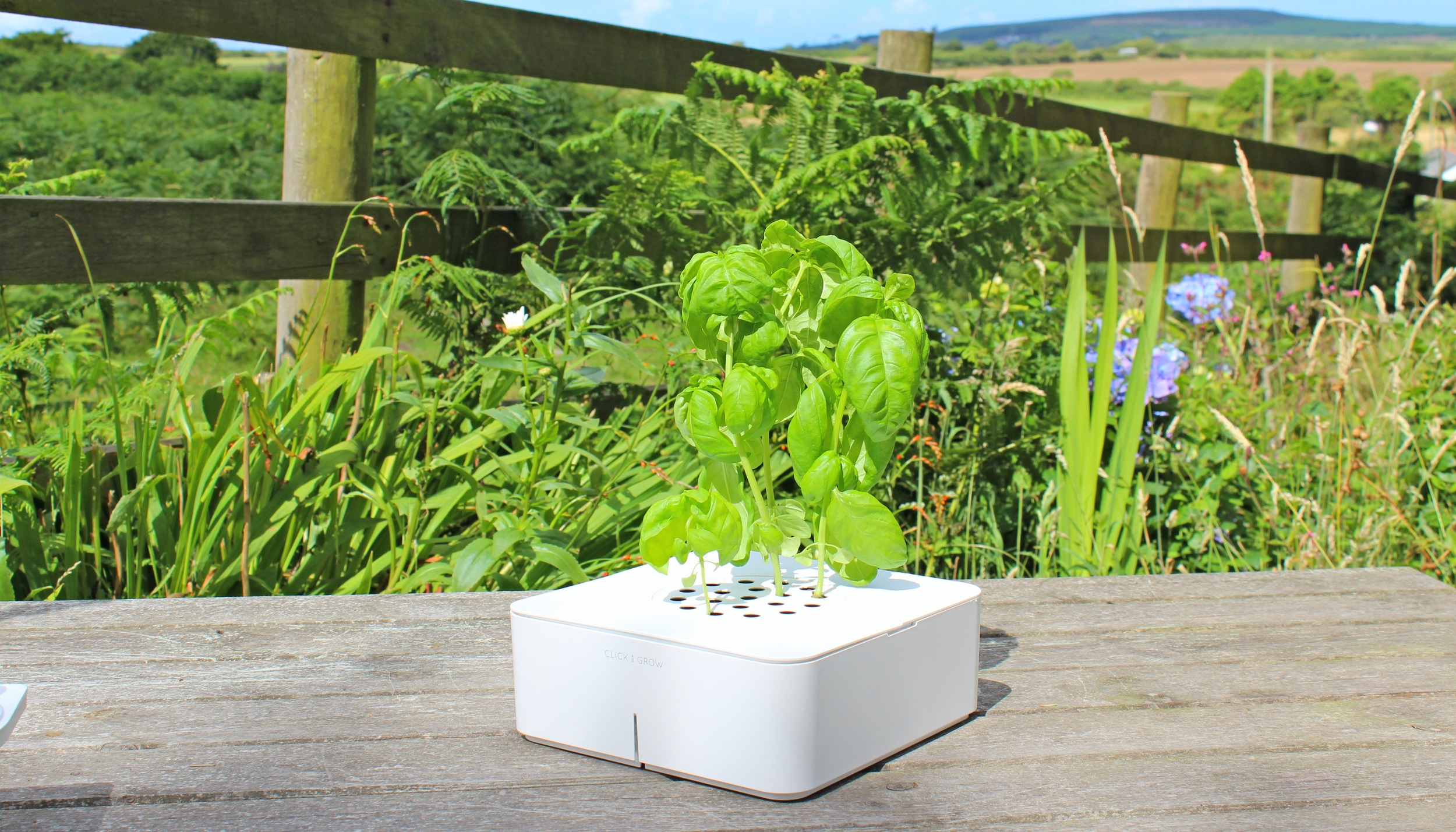 Click & Grow Smart Flowerpot Growing Basil