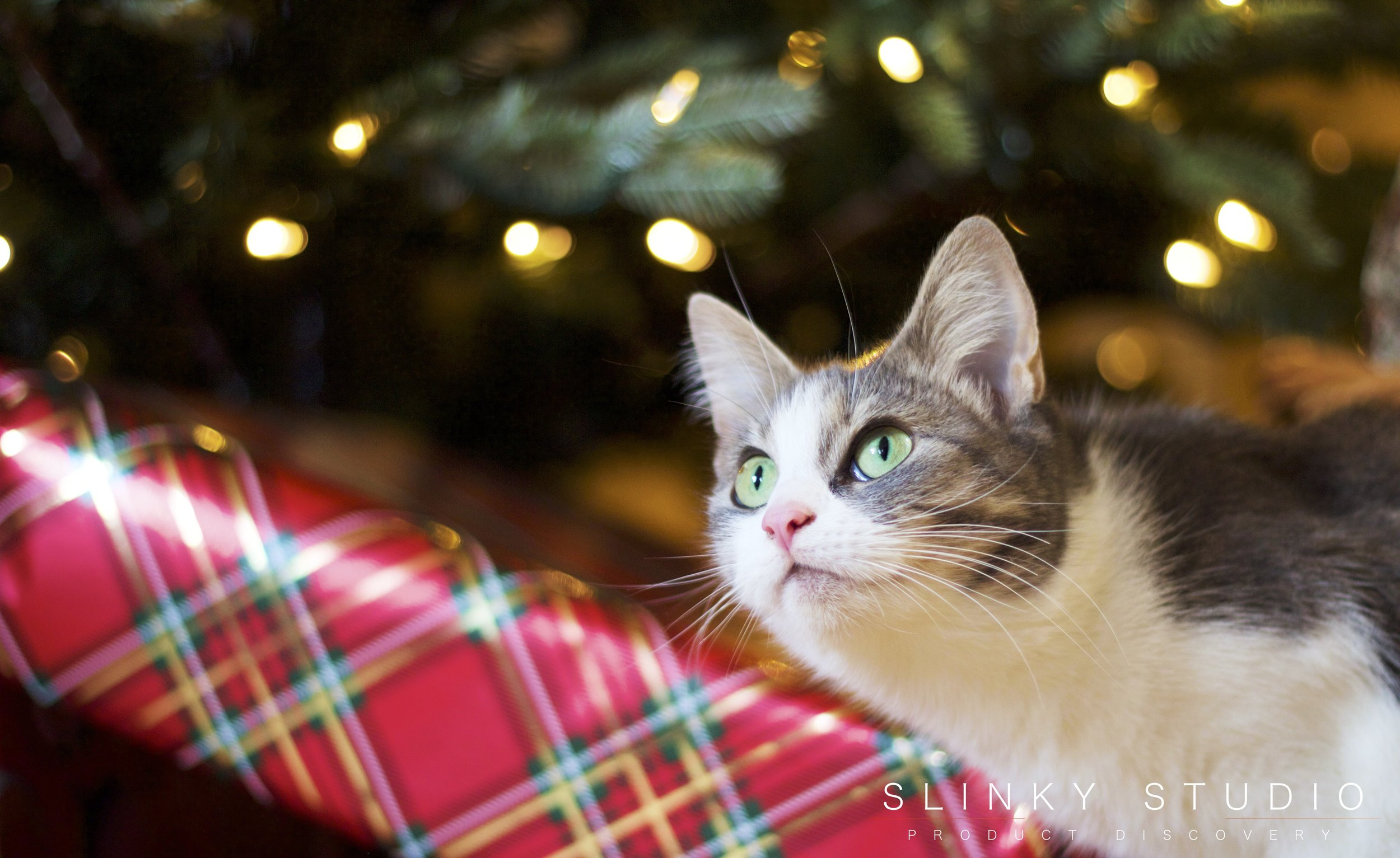 Balsam Hill Fraser Fir Christmas Tree Josie the Cat Sitting in Front.jpg
