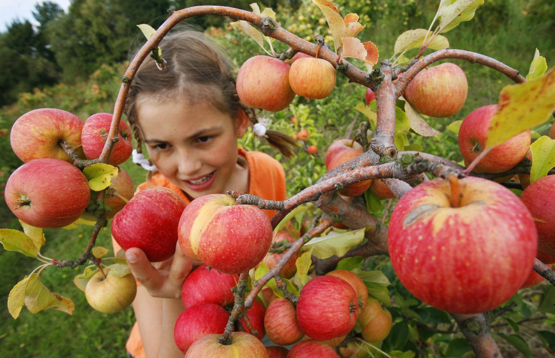 girl-apple-picking.jpg