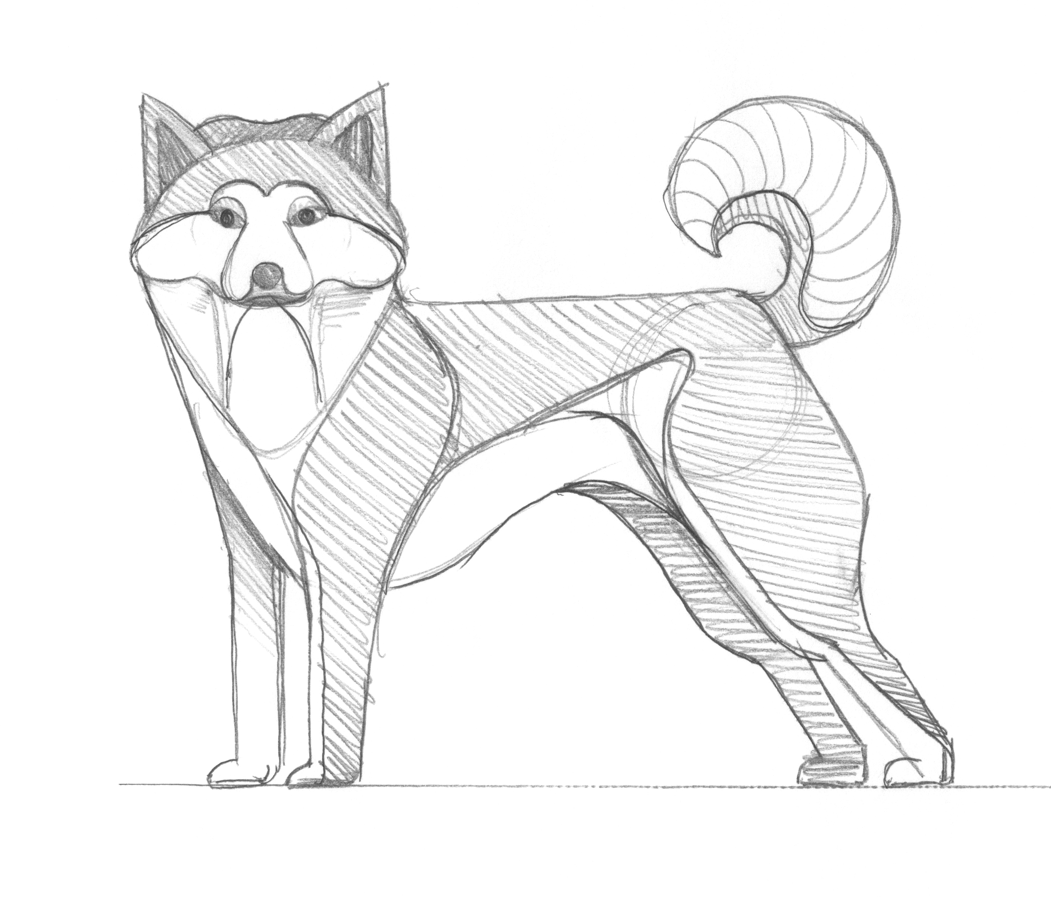 Shiba Inu Sketch by DKNG