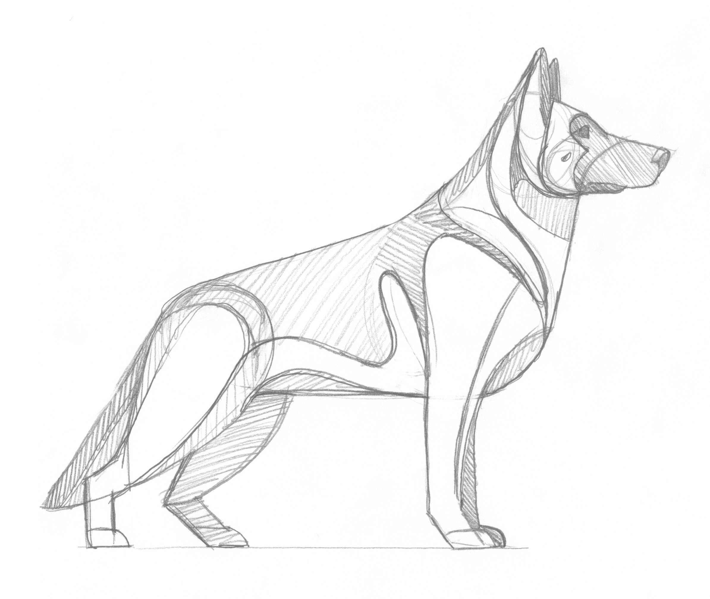 German Shepherd Sketch by DKNG