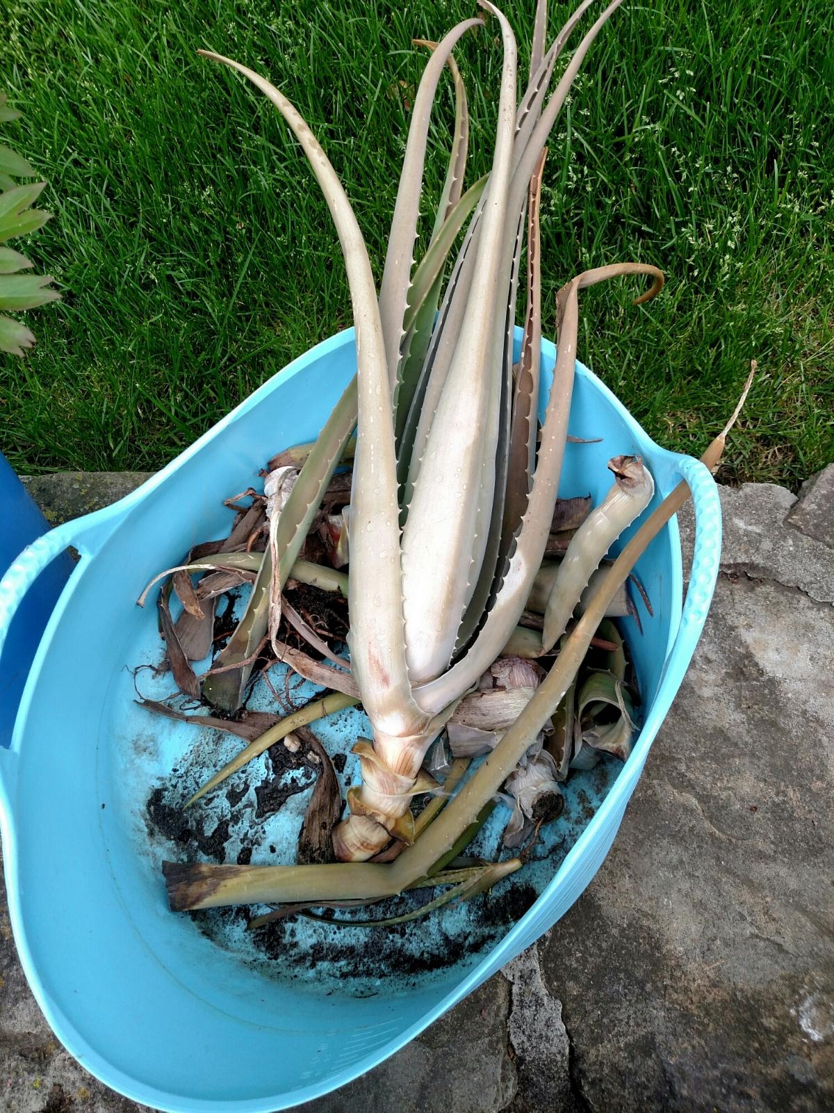 the aloe is dead. Long live the Aloe.