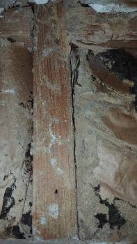 Wood destroying insect activity.