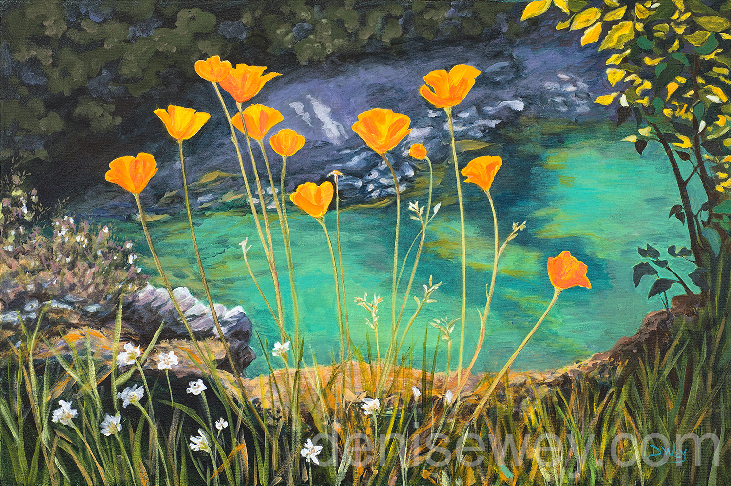 Poppies on the Yuba