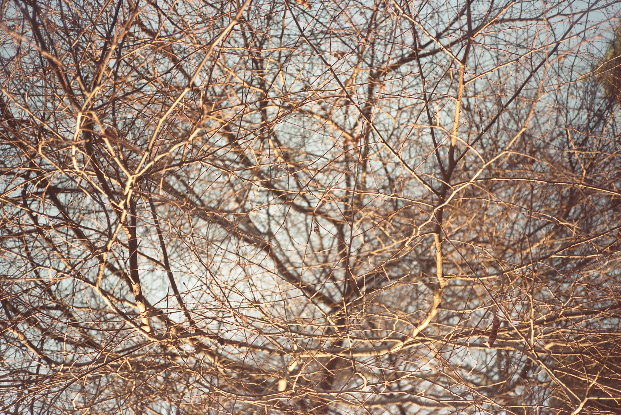 Branches-22.2.2015.jpg