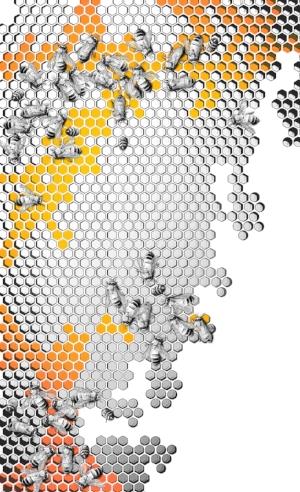 EiBO Gear_Bees_Front_4print_3_LQ.jpg