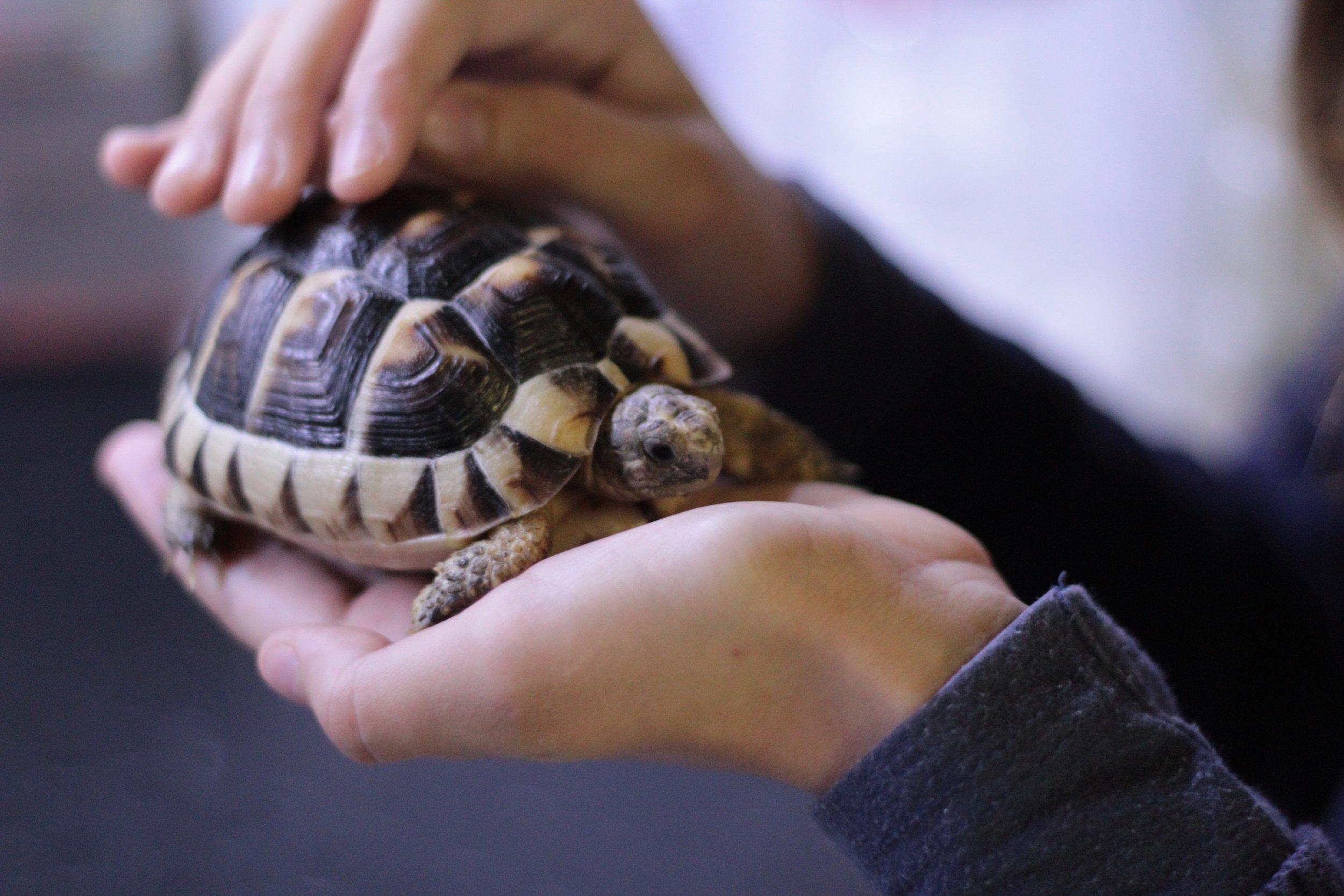 turtle pic.jpg