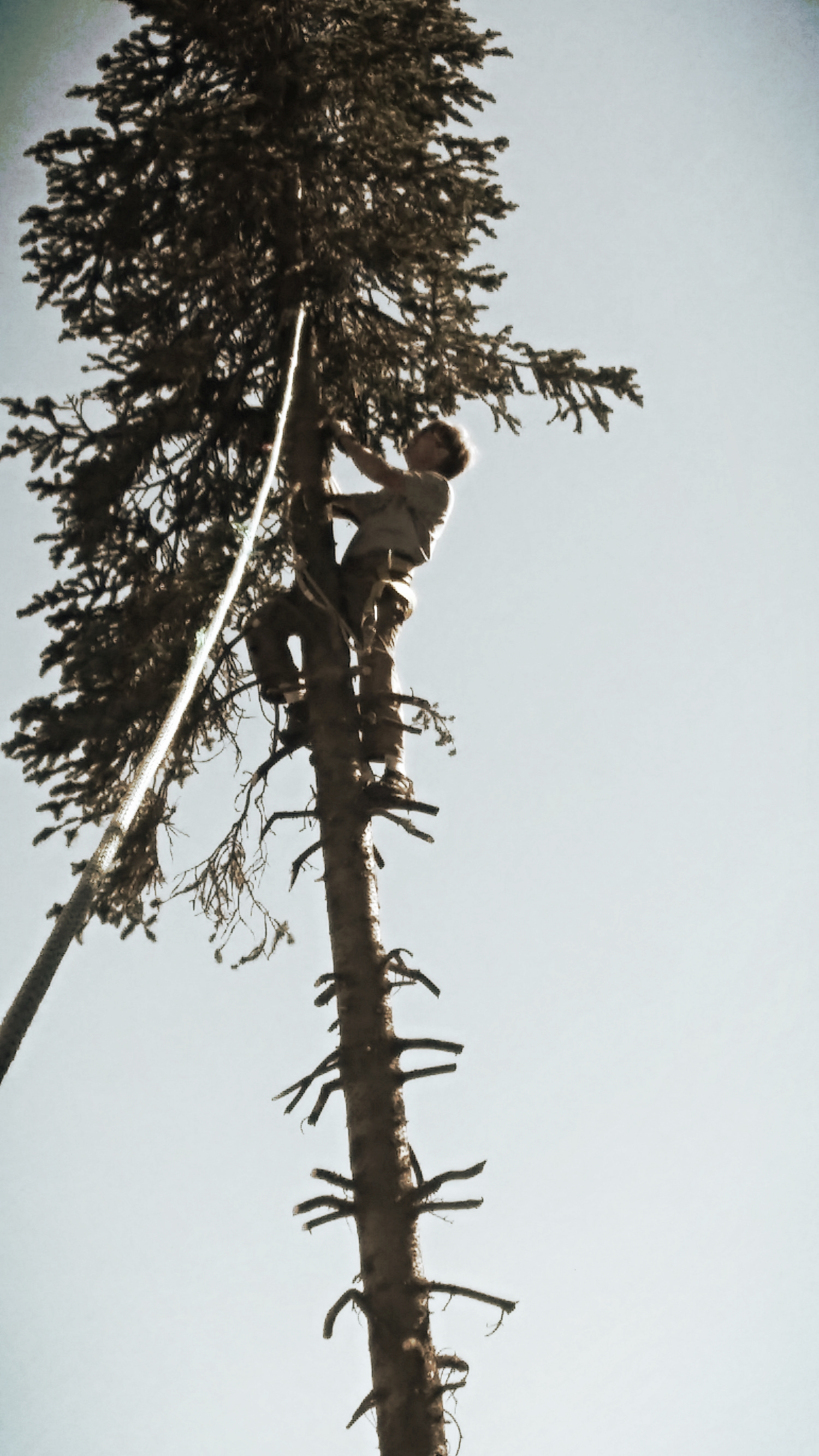 Mike working hard to safely cut down this tree.
